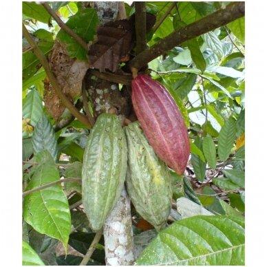 Kakavos sviestas iš Peru, ekologiškas, 100 g 3